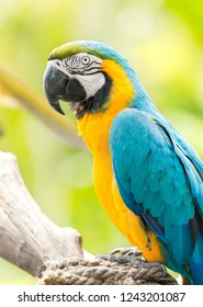 Portrait of  blue-and-yellow macaw parrot against jungle background