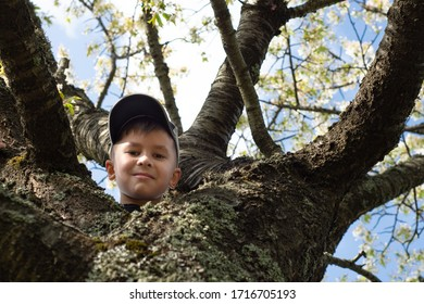 Portrait of a boy posing on a tree outdoors