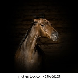 Portrait of the brown angry horse