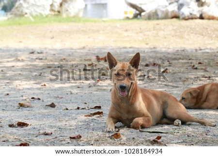 ba4ecf8a6f4 Portrait Brown Dog Laying On Ground Stock Photo (Edit Now ...