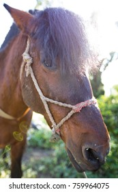 Portrait of brown horse face with rim light on hair
