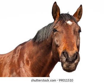 Portrait of a brown horse isolated on white background.