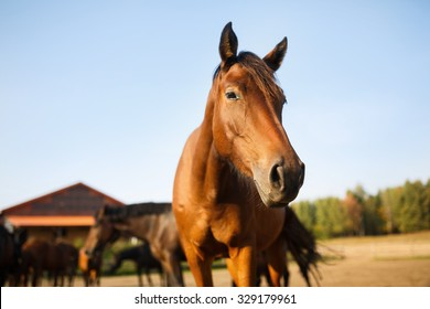 Portrait of the brown horse in the meadow at autumn time