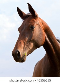 Portrait of a brown horse on a farm
