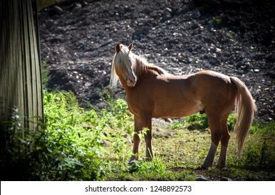 Portrait of a brown horse with a white mane on a sunny day in the countryside