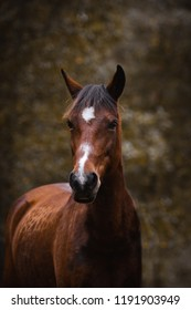 Portrait of brown pony