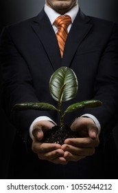 portrait businessman in costume with scion rubber plant
