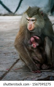 Portrait of a caged female monkey and her child