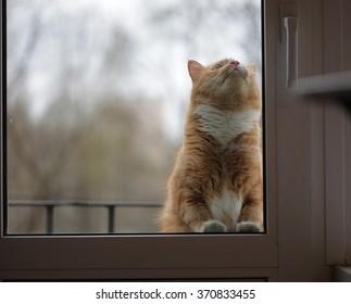 portrait of cat behind the glass door