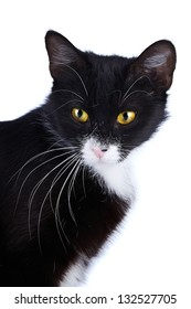 Portrait of a cat. Black-and-white cat. Cat with yellow eyes. Cat on a white background. Black cat. House predator. Small predatory animal.