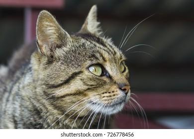 Portrait of a cat close-up. Pet animal.