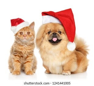 Portrait of cat and dog in Santa red cap, on white background. Christmas animals theme