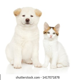 Portrait of cat and dog together on white background