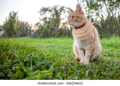 Portrait of a cat in the grass