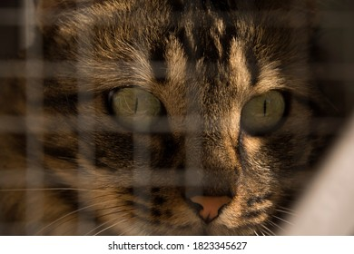 Portrait of cat with green eyes with defocused fence and close-up.