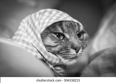 portrait of a cat in a hat, in a headscarf with sad eyes, black and white photo
