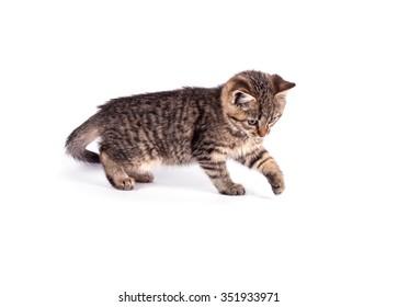 Portrait cat isolated on white background