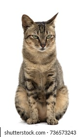 Portrait of cat isolated on white background.