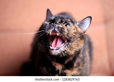 Portrait of a cat with an open mouth