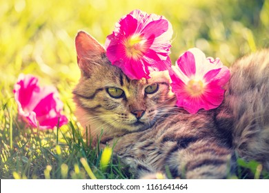 Cat and pink flower images stock photos vectors shutterstock portrait of a cat outdoors with flowers on the head cat lying in the garden mightylinksfo