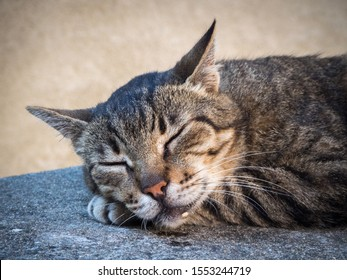 portrait of a cat sleeping happily drooling