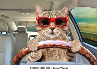 Portrait of a cat with sunglasses driving a car