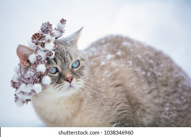 Portrait of a cat wearing Christmas wreath outdoors in winter