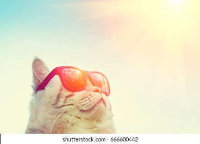 Portrait of cat wearing sunglasses against sky, looking at sun