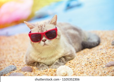 Portrait of cat wearing sunglasses lying on the beach