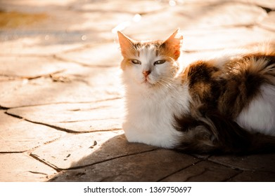 Portrait of a cat with white chest and mistrustful eyes laying on the ground under the sun