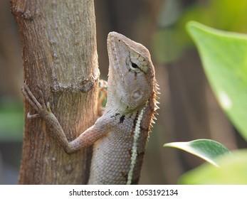Portrait of chameleon, closeup wild animal.