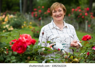 portrait of cheerful retiree woman gardening red bush roses outdoors in yard
