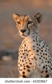 A portrait of a cheetah mother