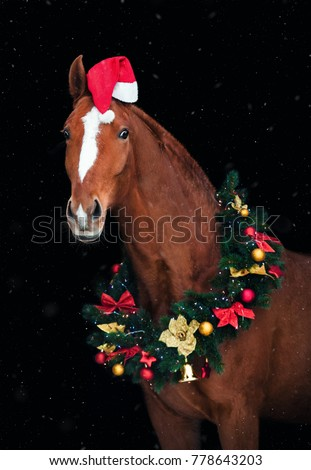 portrait of chestnut horse in christmas decorations and a santa hat on a black background