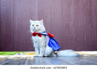 portrait chinchilla persian cat in sailor moon dress with wood background,Bored cat