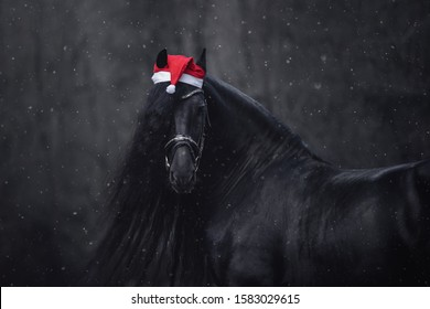 portrait of christmas friesian stallion horse with long mane in red cap with bridle in forest during snowfall in winter