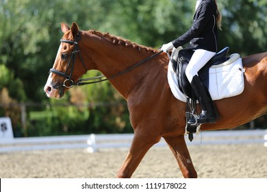 Portrait close up of dressage sport horse with unknown rider.Sport horse portrait during dressage competition under saddle