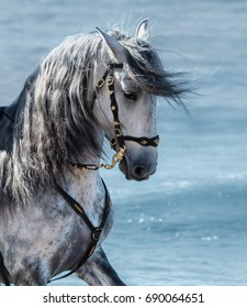 Portrait close up Spanish purebred horse with long mane on sea background.