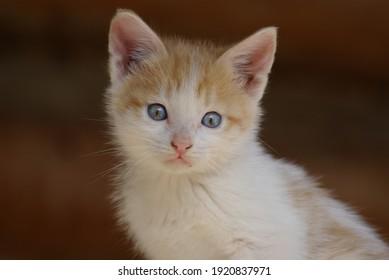 portrait close-up cat photo background