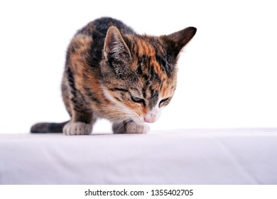 portrait of a colourful cat child in front white  background