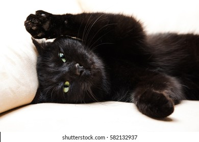 Cat Angry Face Images, Stock Photos & Vectors | Shutterstock