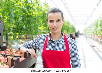 Portrait of confident woman standing with tomato crates in greenhouse