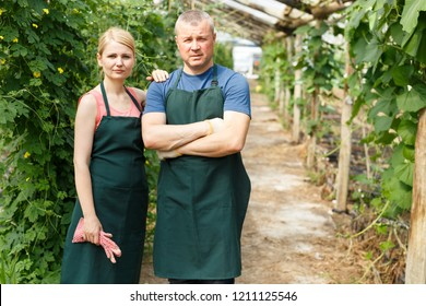 Portrait of couple of horticulturistes  in aprons standing near seedlings in  hothouse