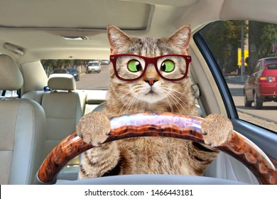 Portrait of a cross-eyed cat with glasses driving a car