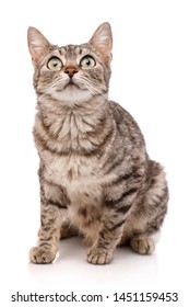 Portrait of a curious cat isolated on white background