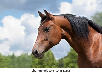 Portrait of a curious Quarter horse mare