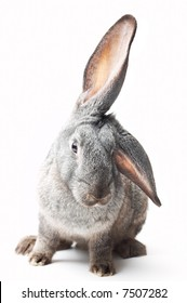 portrait of curious rabbit on white