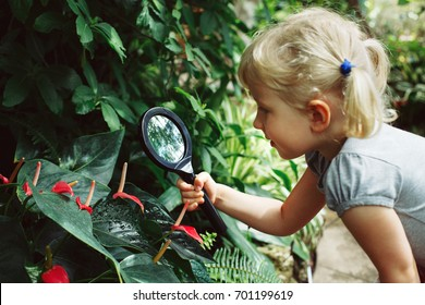 Portrait of cute adorable white Caucasian girl looking at plants flowers anthurium through magnifying glass. Child with loupe studying learning nature in garden. Early development education concept.