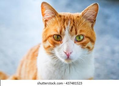 a portrait of a cute brown cat