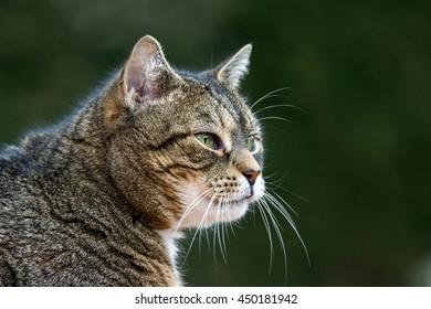 Portrait cute cat
